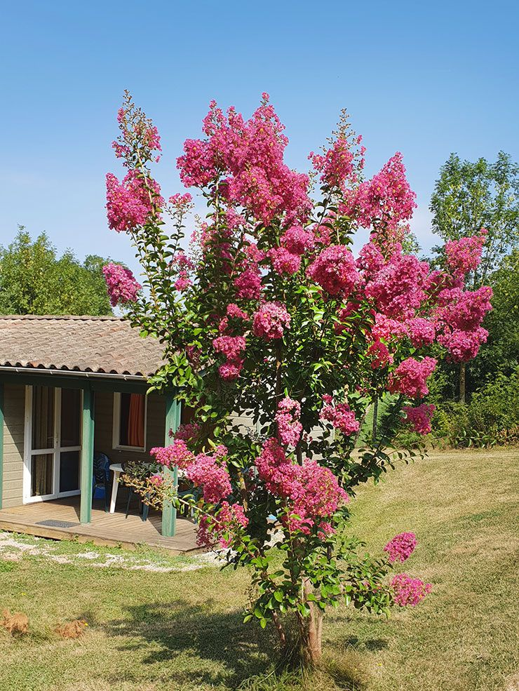 chalet-familial-bastida-camping-monts-albi-02 2